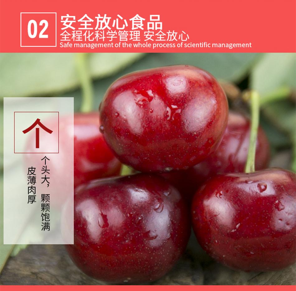 原生態櫻桃_05.jpg