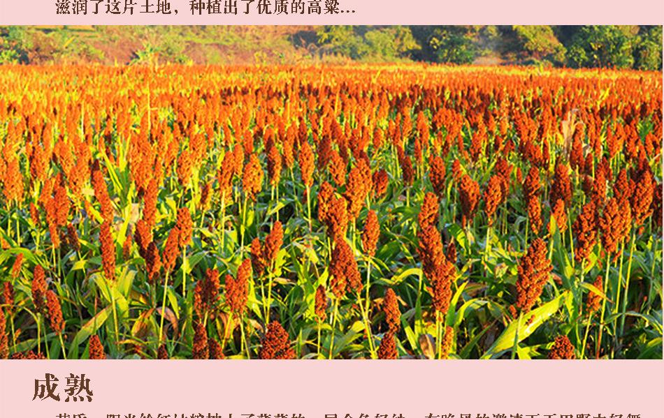 紅高粱詳情頁_04.jpg